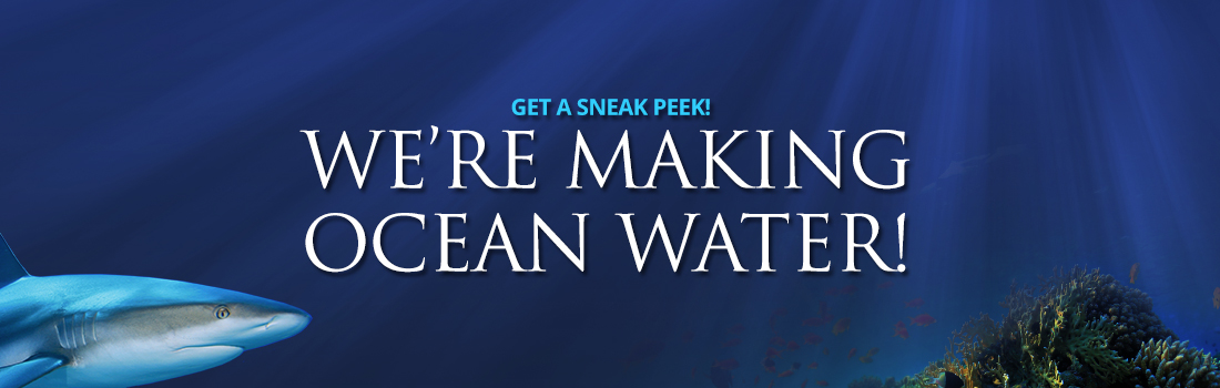 We're making ocean water! Sneak peek at OdySea Aquarium