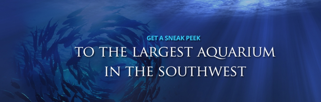 Get a sneak peek inside OdySea Aquarium