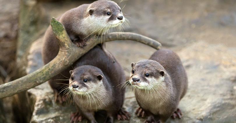 The Otter Banks