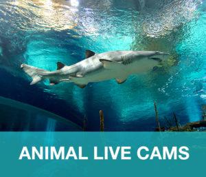 AnimalLiveCam-Main-Nav