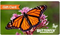 BW-holidaylandingpage-giftcard
