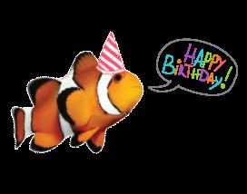 Bday-Fish