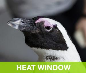 HeatWindow