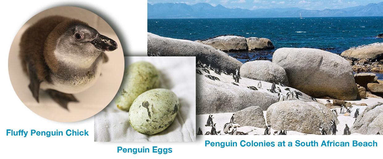 Molting-habitat-eggs