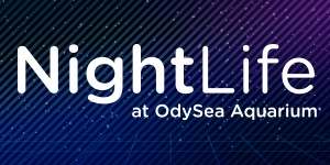 OA-NightLife-Jan17-PromoNav