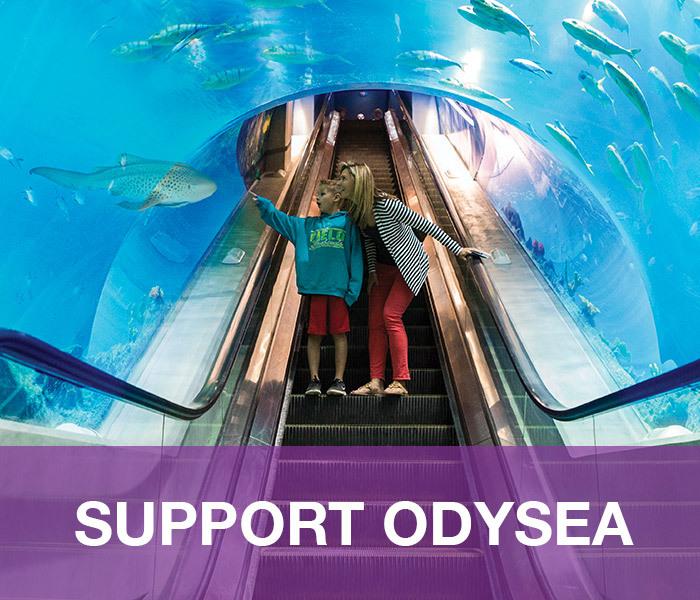 OA-SupportOdySea-main-nav