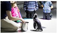 OA-holidaylandingpage-penguin