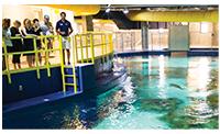 OA-holidaylandingpage-sharktour