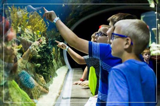 OdySea Aquarium in Scottsdale, AZ - America's Newest Aquarium