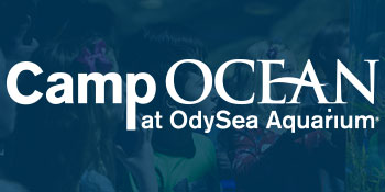 OA_Camp-Ocean-Promo-Nav