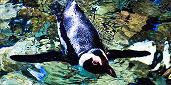 Penguin-Nav