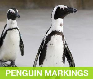 PenguinMarkings
