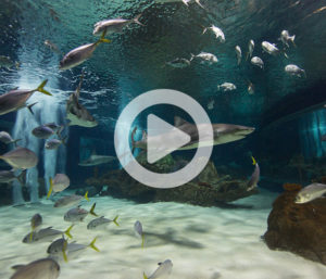 Shark-cam