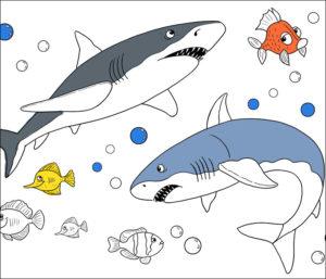 Shark-coloring
