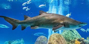 Shark-nav