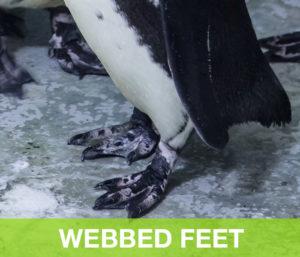 WebbedFeet