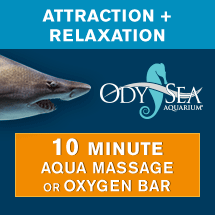 attraction-relaxation