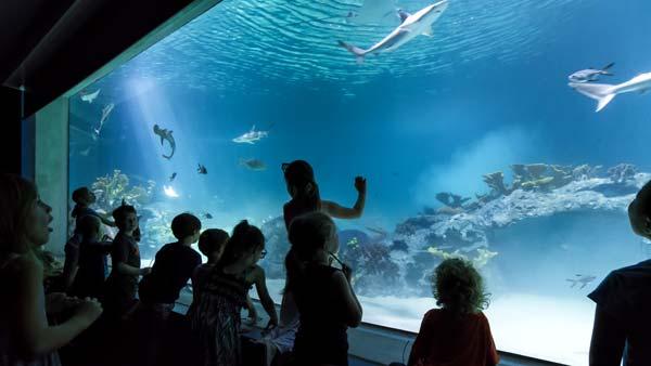 deep ocean gallery at odysea aquarium in scottsdale az