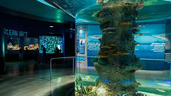 ocean art gallery at odysea aquarium in scottsdale az