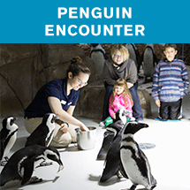 penguin-encounter