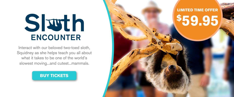 Sloth Encounter