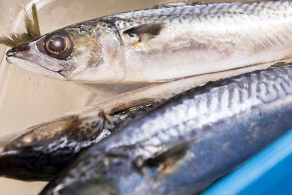 Sustainable Mackerel